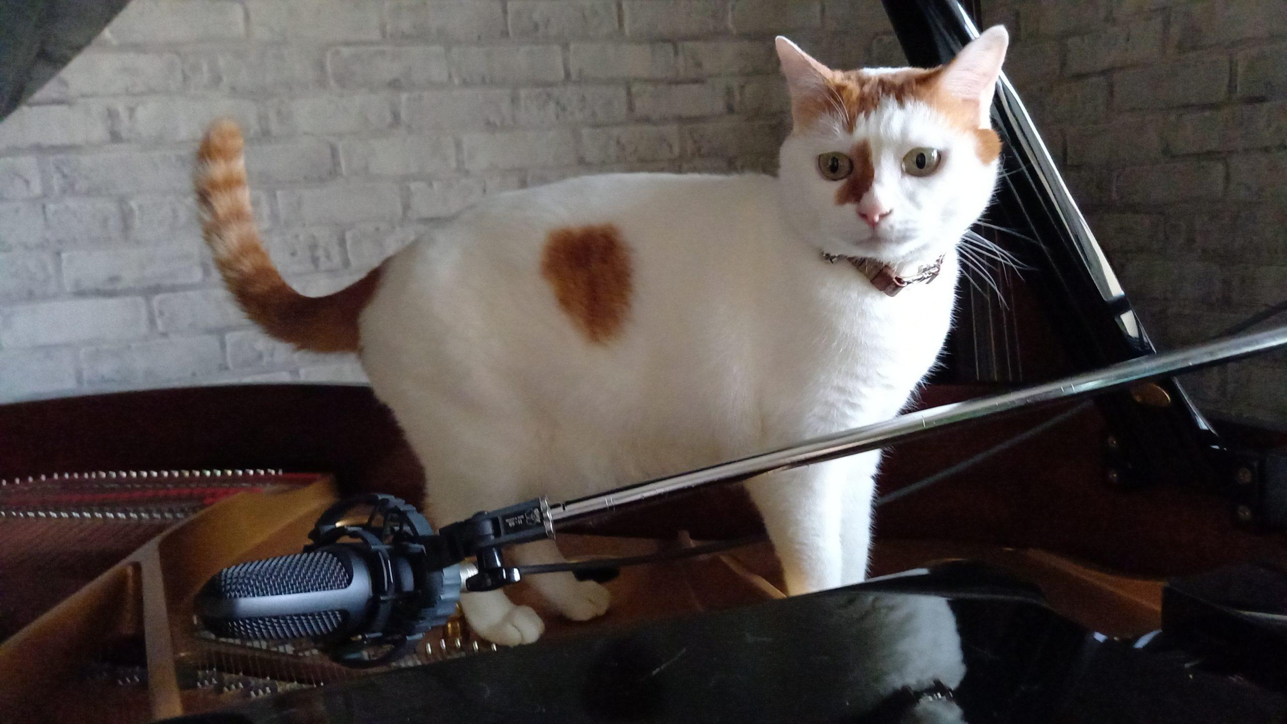 猫vsコンデンサーマイク
